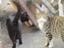 メス猫2匹.JPG
