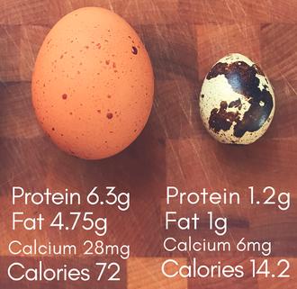 鶏とウズラの卵.png
