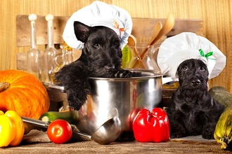 scottish-terrier-puppies-kitchen-portrait-with-peppers.jpg